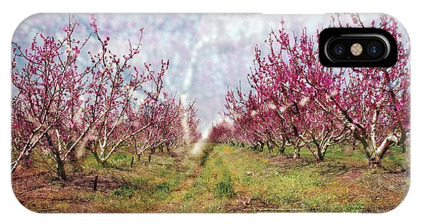 An Orchard In Blossom In The Golan Heights IPhone Case