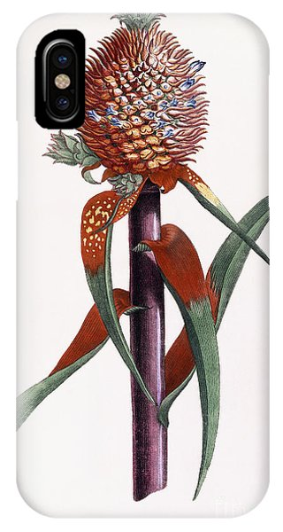 Organic iPhone Case - Ananas  Pineapple by Georg Dionysius Ehret