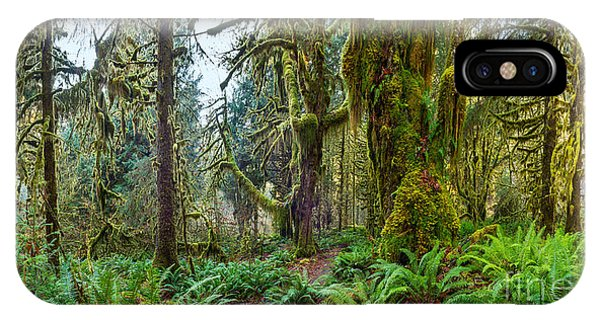 Ancient Forest Panorama IPhone Case