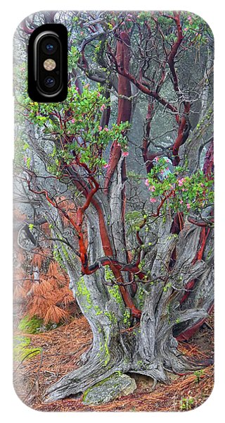 Ancient Manzanita No. 2 IPhone Case