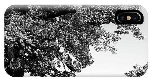 View iPhone Case - Ancient Oak, Bradgate Park by John Edwards