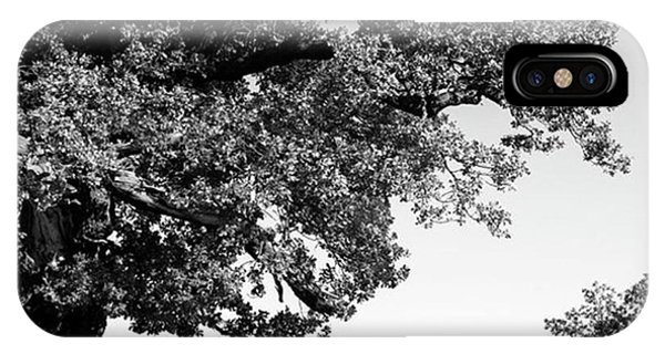 iPhone Case - Ancient Oak, Bradgate Park by John Edwards