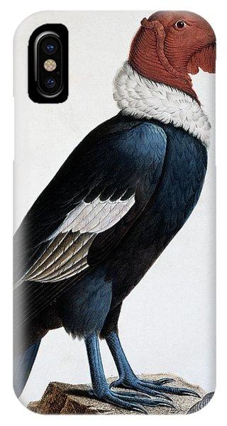 Condor iPhone Case - Andean Condor by English School