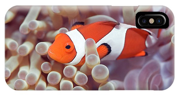 Anemone And Clown-fish IPhone Case