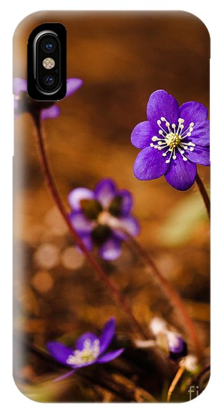Anemone Hepatica IPhone Case