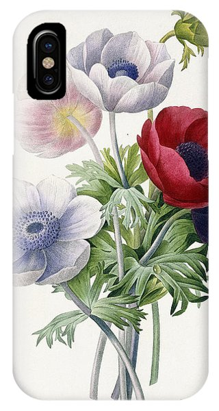 Redoute iPhone Case - Anemone Simple by Pierre Joseph Redoute
