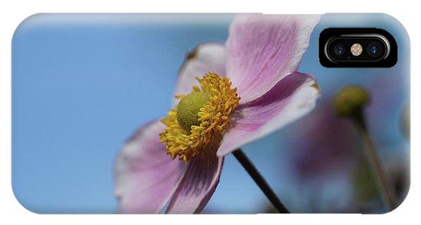 Anemone Tomentosa Flower IPhone Case