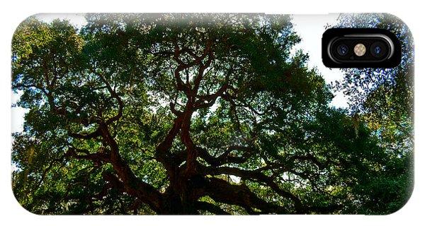 Angel Oak Tree 2004 IPhone Case