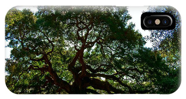 Angel Oak Tree 2004 IPhone Case