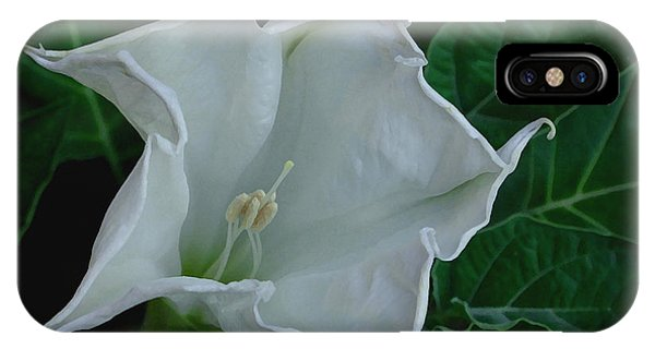 Angel Trumpet Opening IPhone Case