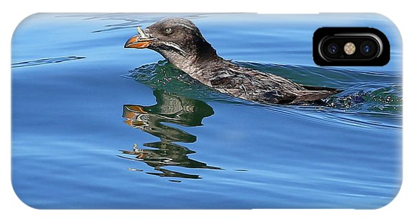Auklets iPhone Case - Angry Bird by BYETPhotography