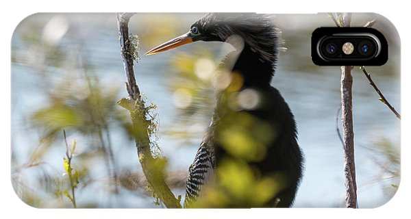 Anhinga 3 March 2018 IPhone Case