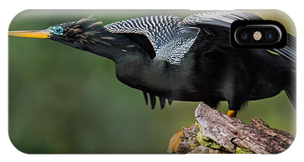 Anhinga iPhone Case - Anhinga Anhinga Anhinga, Costa Rica by Panoramic Images