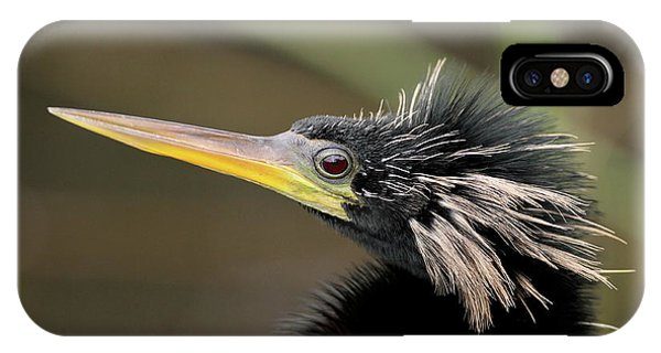 Anhinga Close-up IPhone Case