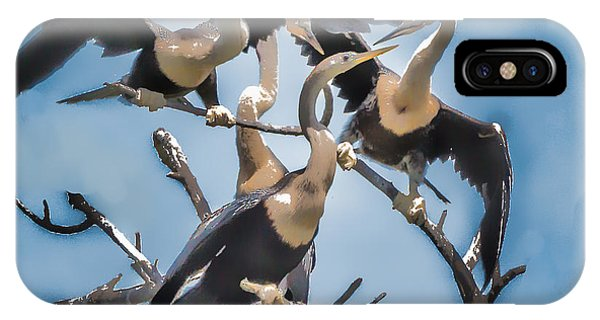 Anhinga Feeding Time IPhone Case