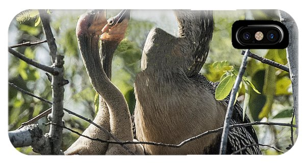 Anhinga In Nest With Her Chicks IPhone Case