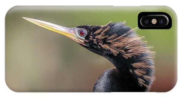 Anhinga Portrait IPhone Case