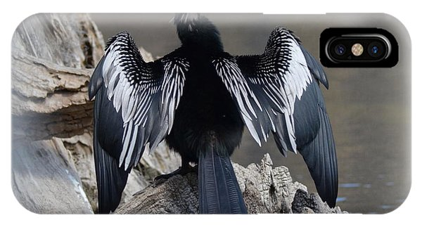 Wakulla iPhone Case - Anhinga With Outstretched Wings by Carla Parris