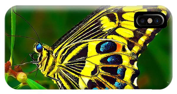 Anise Swallowtail Butterfly IPhone Case