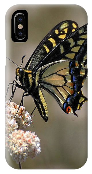 Anise Swallowtail IPhone Case