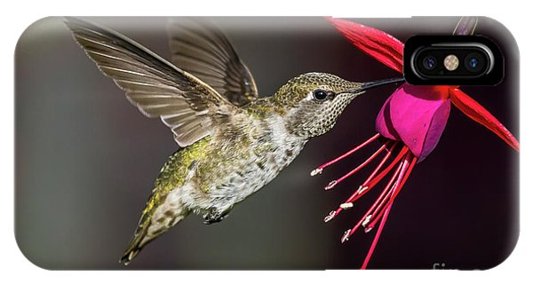 Anna Immature Hummingbird IPhone Case