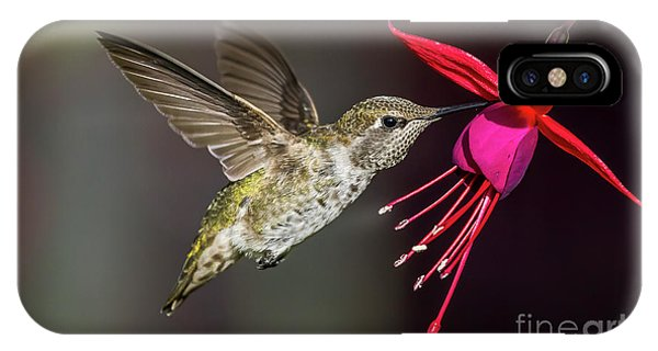 Anna Immature Hummingbird IPhone Case