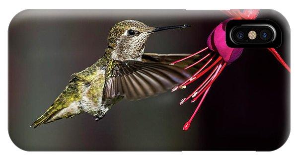 Anna Juvenile Hummingbird IPhone Case