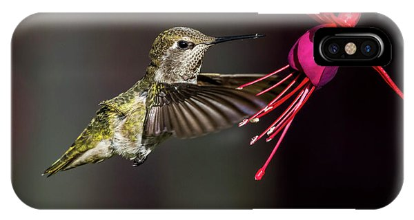 Anna Juvenile Hummingbird IPhone Case