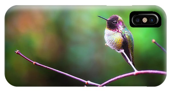Anna's Hummingbird I IPhone Case