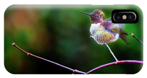 Anna's Hummingbird IIi IPhone Case