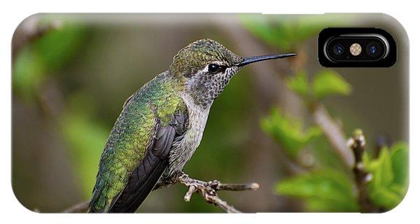 Anna's Hummingbird On Lime Tree IPhone Case