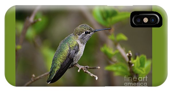 Anna's Hummingbird On Lime Tree IPhone Case