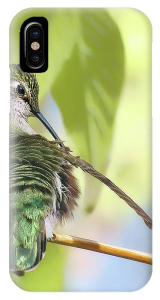 Humming Bird iPhone Case - Anna's Hummingbird - Preening by Nikolyn McDonald