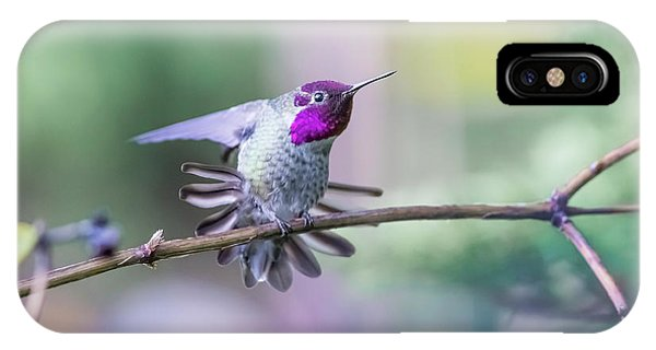 Anna's Hummingbird Stretching IPhone Case