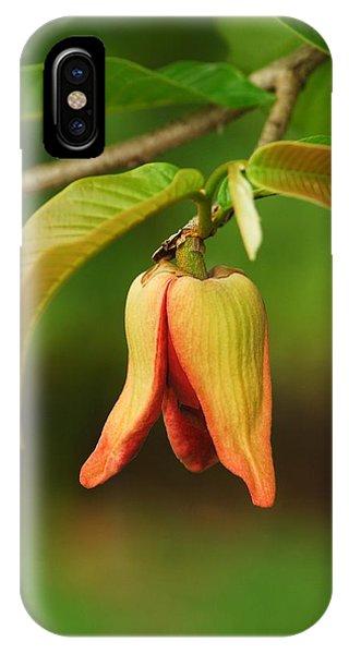 Annona Purpurea Flower IPhone Case