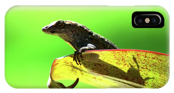 Anole In Green IPhone Case