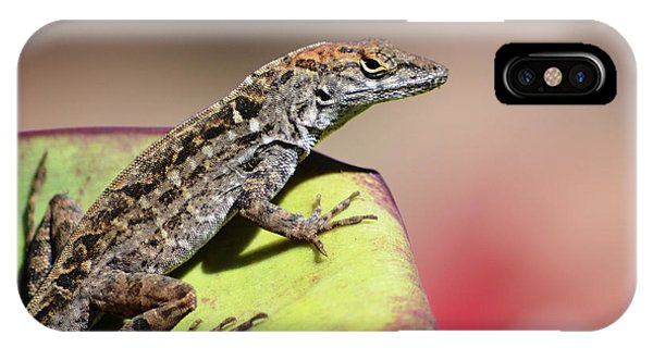 Anole In Rose IPhone Case