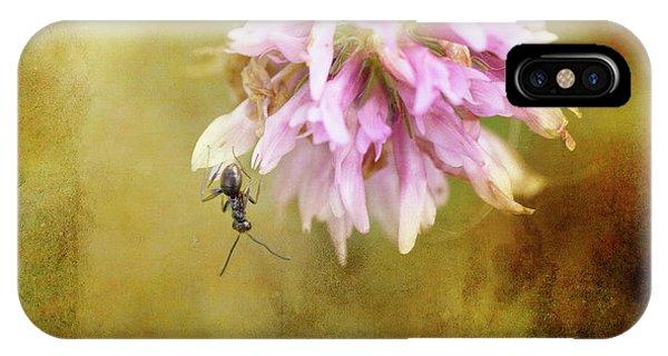 Ant iPhone Case - Ant Acrobatics by Susan Capuano