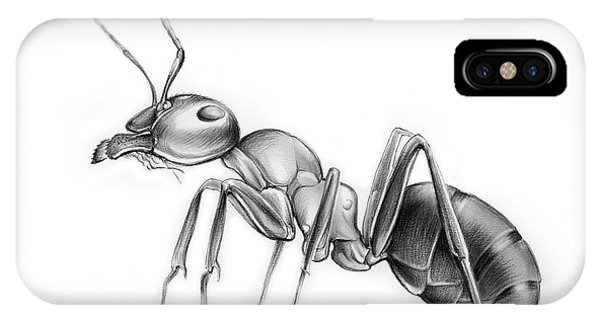 Ant iPhone Case - Ant by Greg Joens