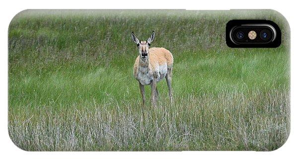 Prong Horned Antelope Lake John Swa Co IPhone Case