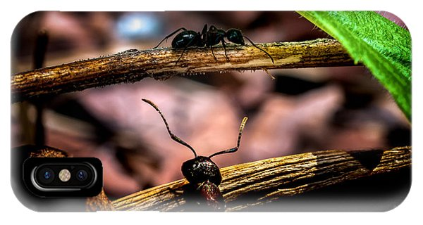 Ant iPhone Case - Ants Adventure by Bob Orsillo