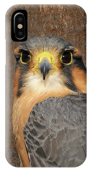 Aplomado Falcon Portrait IPhone Case