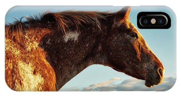 Appaloosa Mare IPhone Case