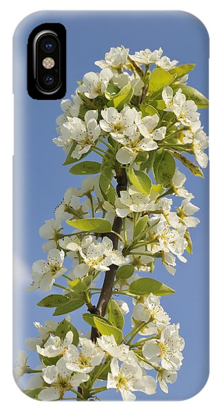 Apple Blossom In Spring IPhone Case