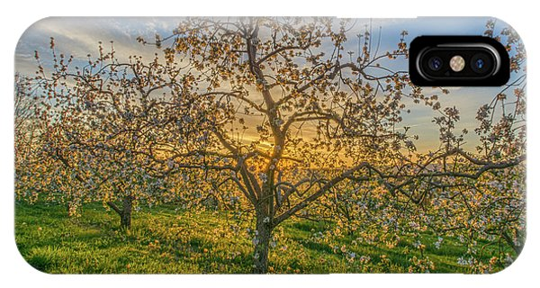 Apple Blossoms At Sunrise 2 IPhone Case