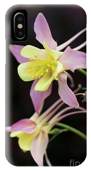 Aquilegia iPhone Case - Aquilegia Swan Pink Yellow by Tim Gainey