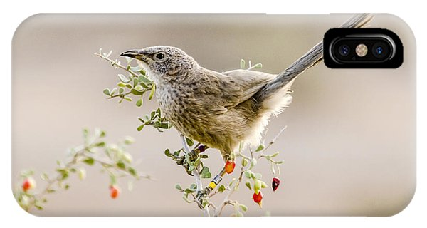 Arabian Babbler IPhone Case