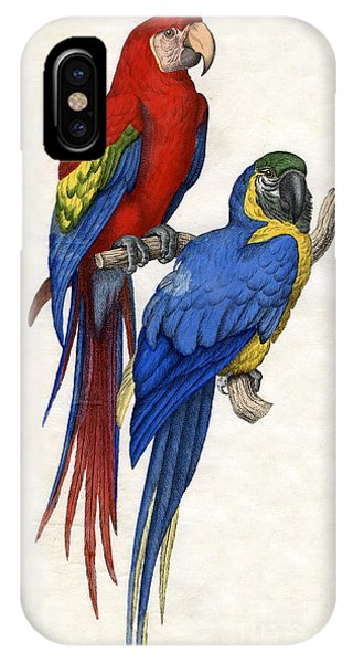 Aracangua And Blue And Yellow Macaw IPhone Case