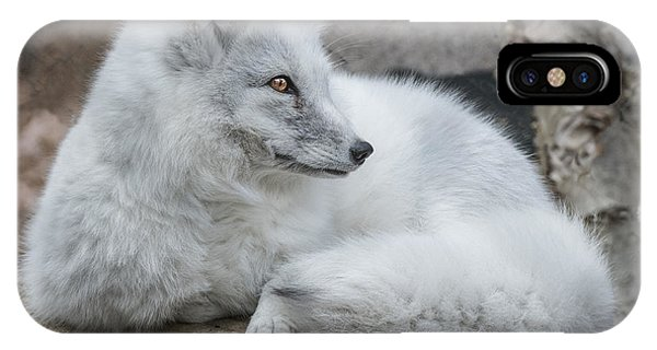 Arctic Fox Profile IPhone Case