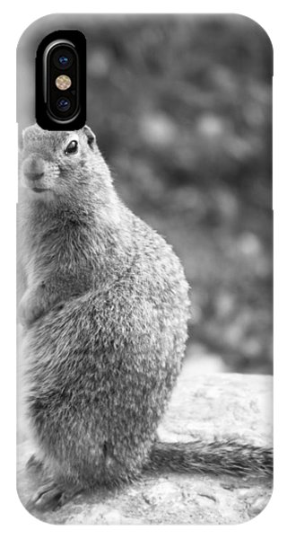 Arctic Ground Squirrel IPhone Case